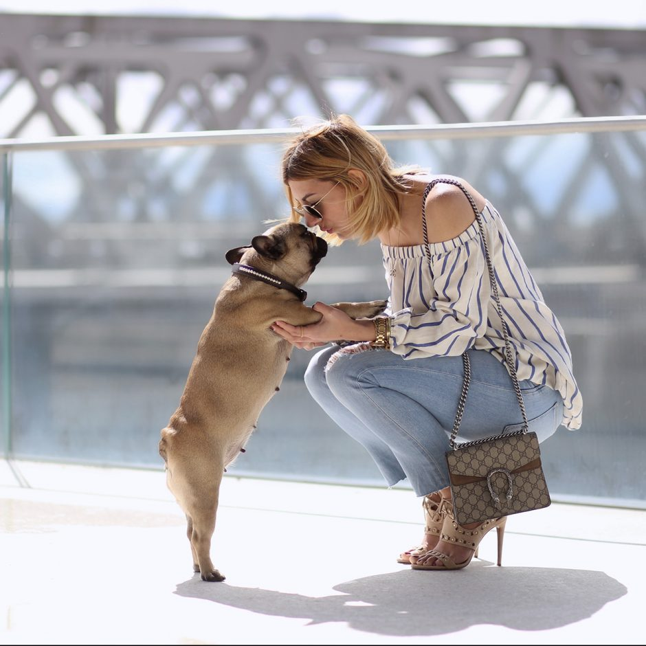 French-Bulldog-Blog