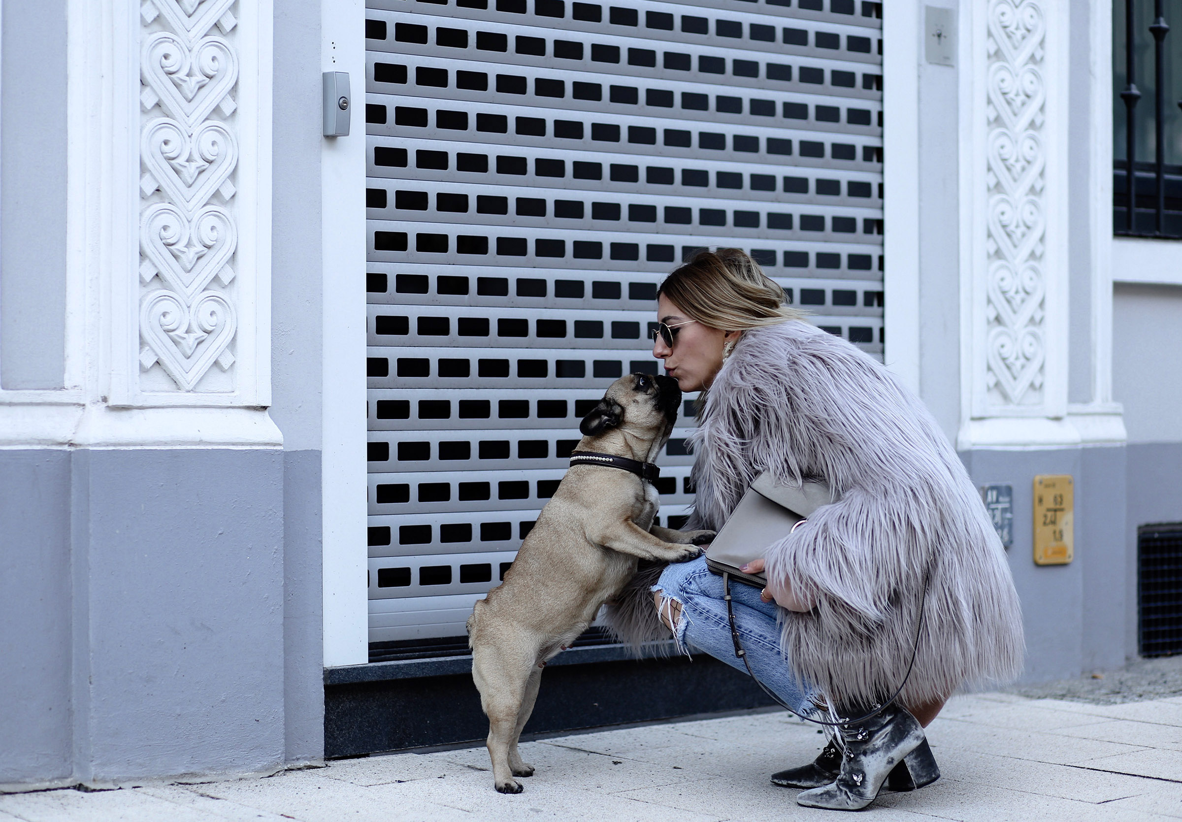 french_bulldog_blogger
